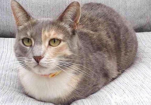 猫咪动作素材动漫