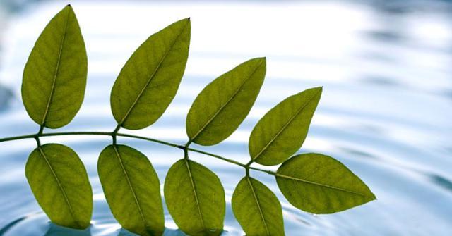 微小树叶的微信头像
