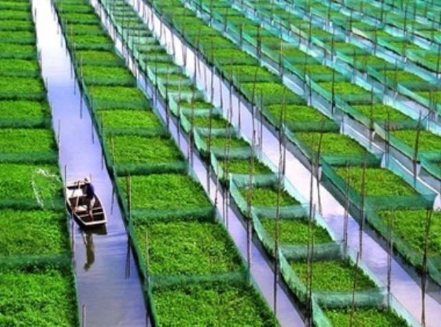 壁纸 成片种植 风景 植物 种植基地 桌面 640_474