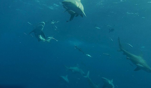 壁纸 海底 海底世界 海洋馆 水族馆 桌面 634_370