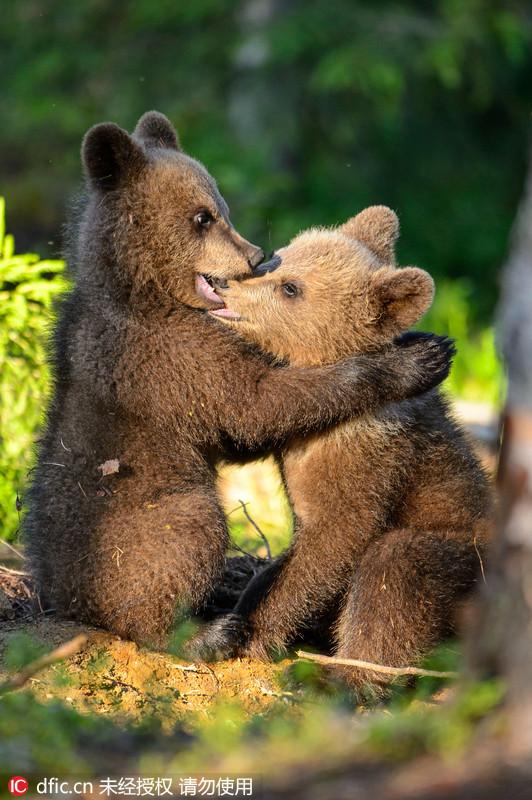 棕熊宝宝图片_珠海长隆海洋王国棕熊宝宝图片珠海景点